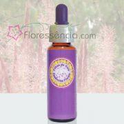 Capim Gordura - 10 ml