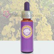 Cassia Imperial - 10 ml