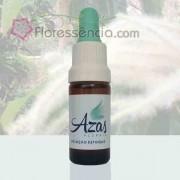 Castanha - 10 ml