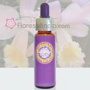Catléia Rosa - 10 ml