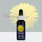 Dandelion - 7,5 ml