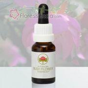 Dog Rose - 15 ml