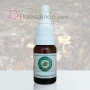 Flor de Pau Amarela - 10 ml