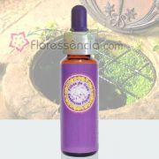 Fonte do Cálice - 10 ml