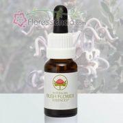 Grey Spider Flower - 15 ml