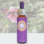 Hibisco Lilás e Vermelho - 10 ml