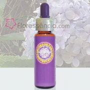 Hortência - 10 ml