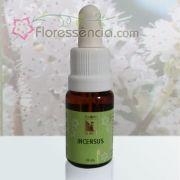 Incensus - 10 ml
