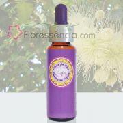 Jambo Branco - 10 ml