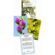 Kit de Cartões - Reflexões com Florais de Bach