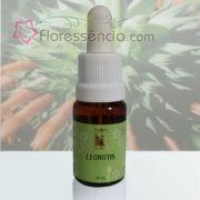 Leonotis - 10 ml