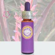 Macambira - 10 ml