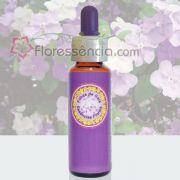Manacá Cheiroso - 10 ml
