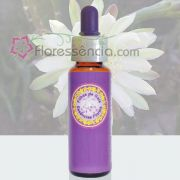 Mandacarú - 10 ml