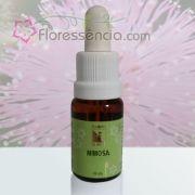 Mimosa - 10 ml