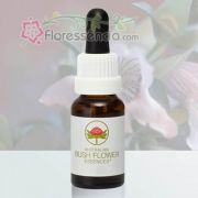 Mint Bush - 15 ml
