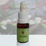 Persicaria - 10 ml