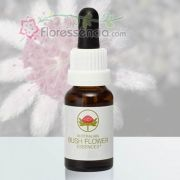 Pink Flannel Flower - 15 ml
