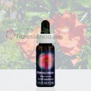 Pomegranate - 7,5 ml