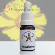 Populus Panicum - 10 ml