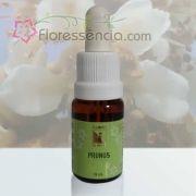 Prunus - 10 ml