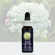 Queen Anne's Lace - 7,5 ml