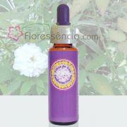 Rosinha Branca - 10 ml