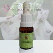 Rosmarinus - 10 ml