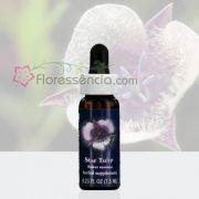 Star Tulip - 7,5 ml