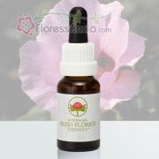Sturt Desert Rose - 15 ml