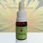 Taraxacum - 10 ml