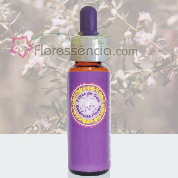 Alecrim do Mato - 10 ml  - Floressência