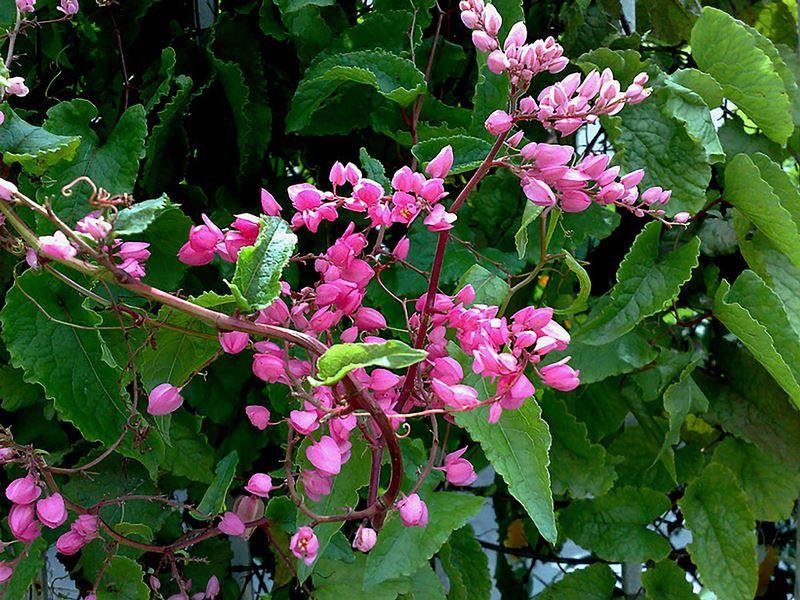 Alegria - Filhas de Gaia - 10 ml  - Floressência
