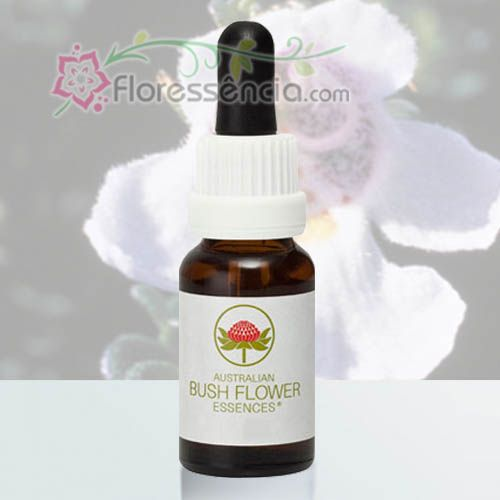 Alpine Mint Bush - 15 ml  - Floressência