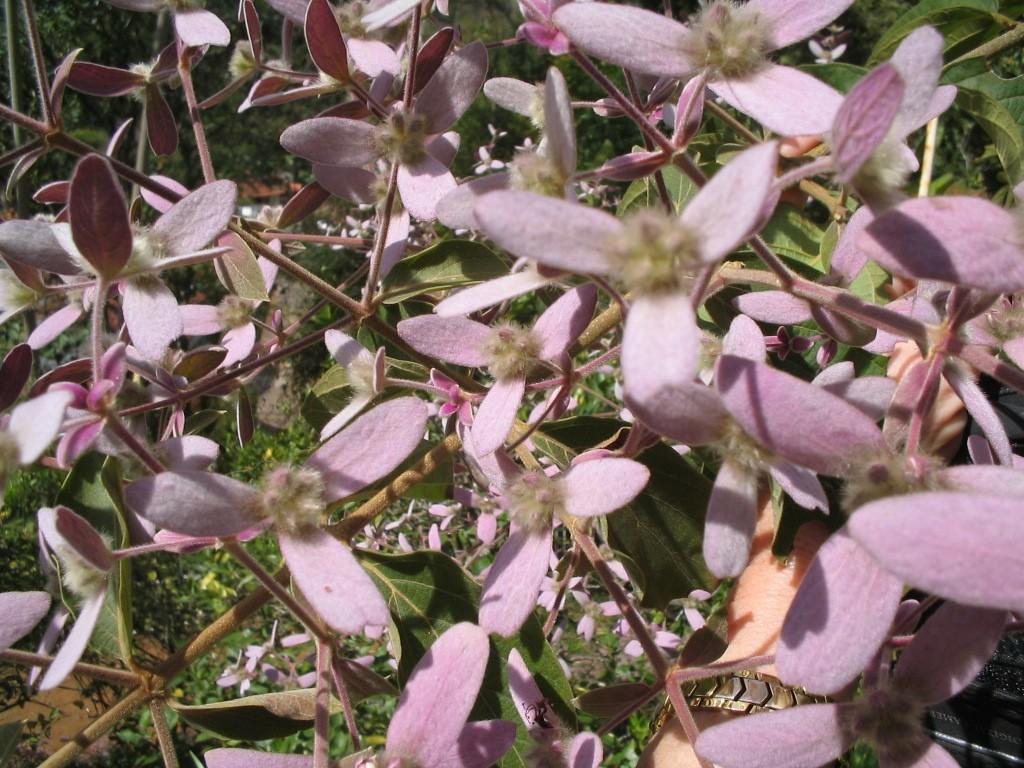Amor em Cascata - 10 ml  - Floressência