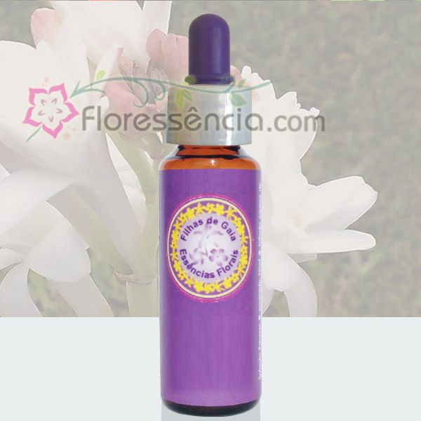 Angélica Perfumada - 10 ml  - Floressência