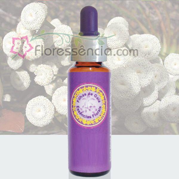 Antena - 10 ml  - Floressência