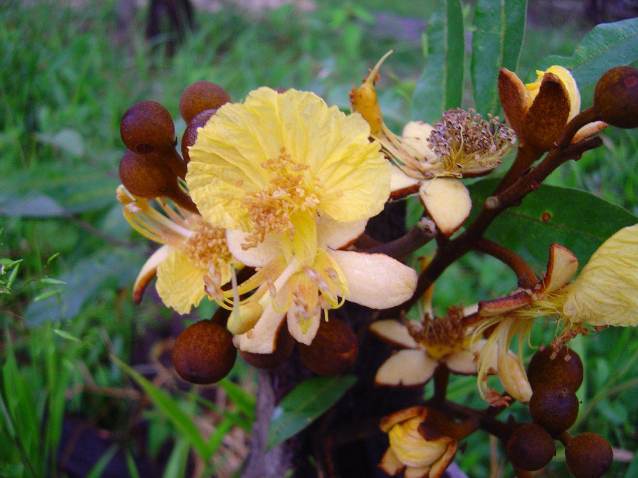 Ashra - 10 ml  - Floressência