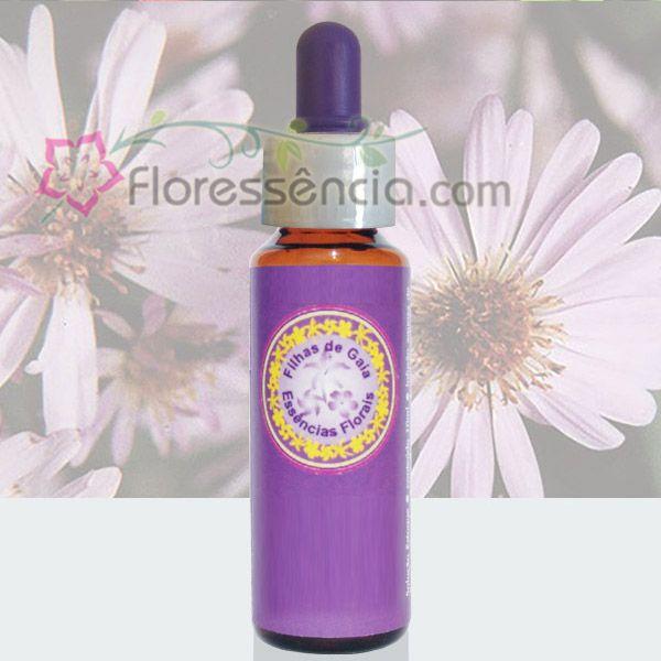 Aster Lilás - 10 ml  - Floressência