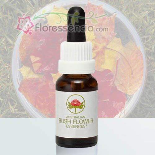 Autumn Leaves - 15 ml  - Floressência
