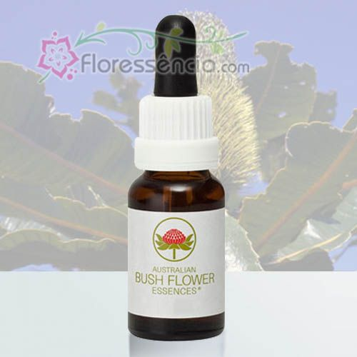 Banksia Robur - 15 ml  - Floressência