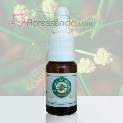 Barba de Bode - 10 ml  - Floressência
