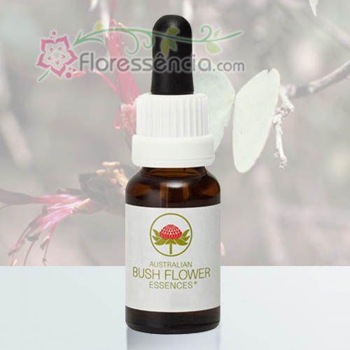 Bauhinia - 15 ml  - Floressência