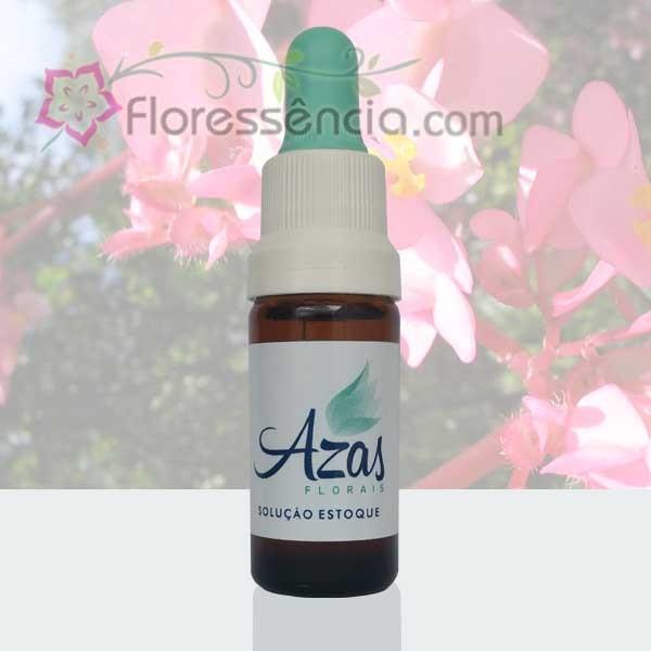 Begônia Redonda - 10 ml  - Floressência