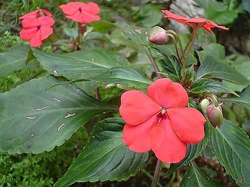 Beijinho - 10 ml  - Floressência