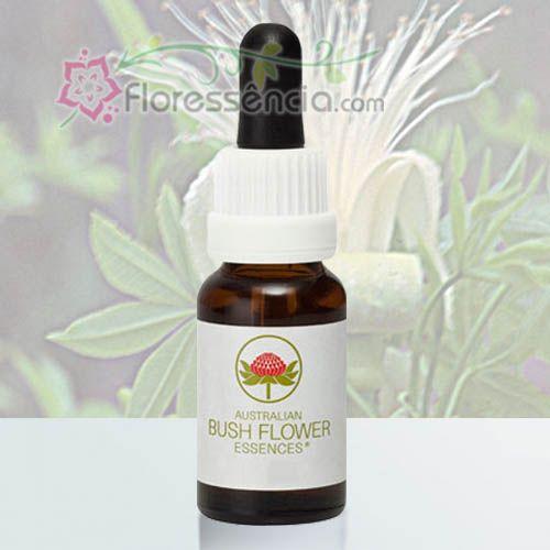 Boab - 15 ml  - Floressência