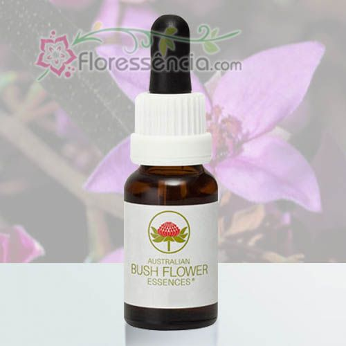 Boronia - 15 ml - Floressência