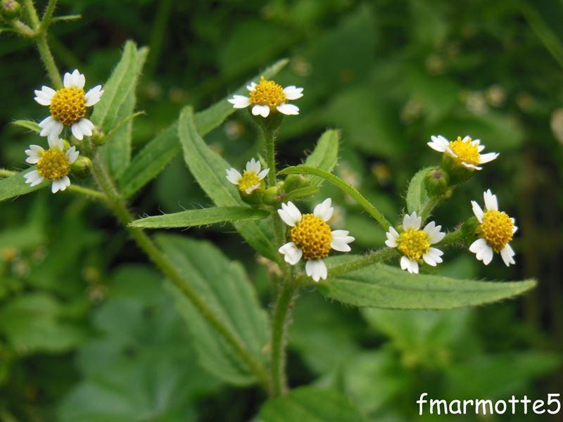 Botão Branco - 10 ml  - Floressência
