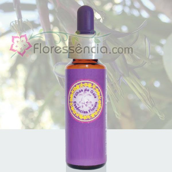 Bromélia Estrela - 10 ml  - Floressência