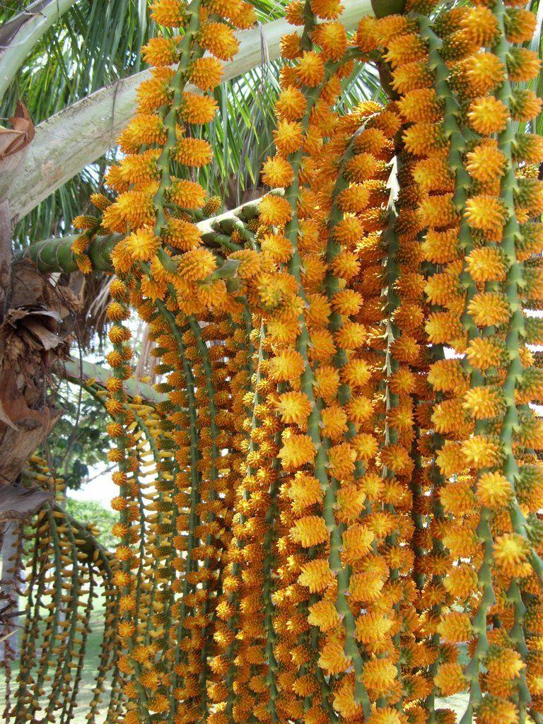 Buriti - 10 ml  - Floressência